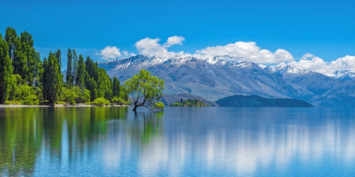 The Wanaka Tree, Sydøen i New Zealand