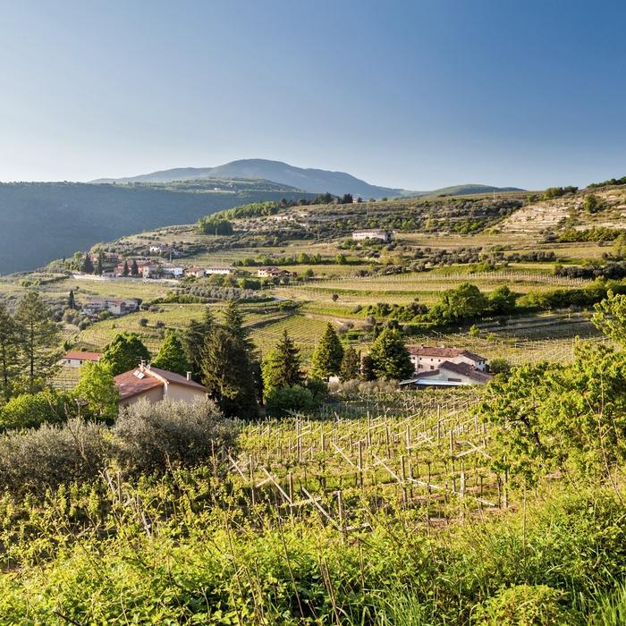 Vinomrader I Norditalien Fdm Travel