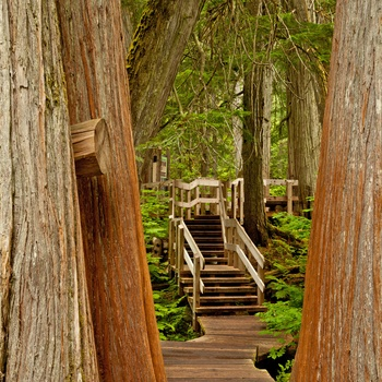 Giant Cedars Boardwalk Trail i Mount Revelstoke National Park, British Columbia i Canada