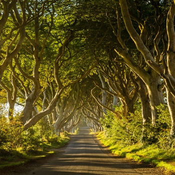 Dark Hedges i Nordirland