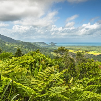 Daintree nord for Cairns i det nordlige Queensland - Australien