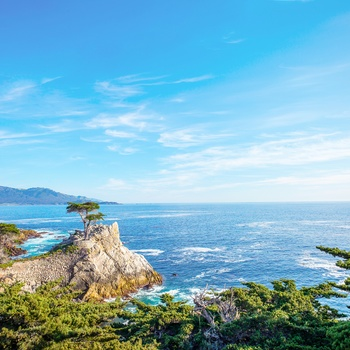 USA Californien 17 Mile Drive Lone Cypress Tree