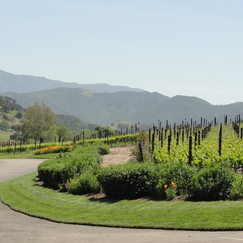 USA Californien Rusack Winery