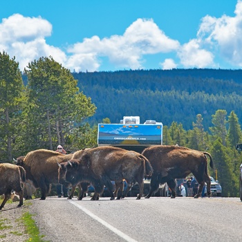 Cruise America Motorhome, Bisoner i Yellowstone i USA