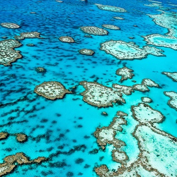 Koralrev - Great Barrier Reef i Australien