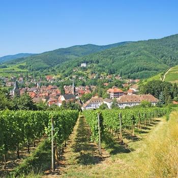 Vinruten I Alsace Fdm Travel