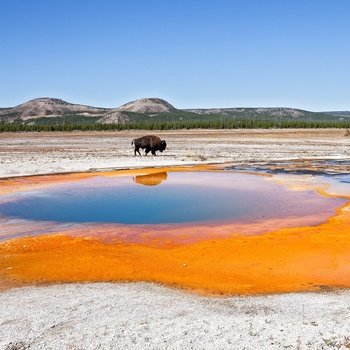 Oplev en nationalpark i USA, eks. Yellowstone, Yosemite mv.