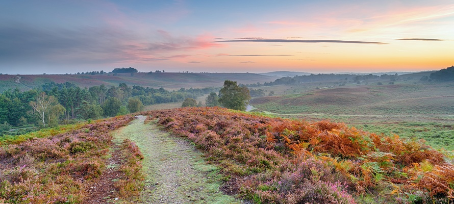New Forest Nationalpark i det sydlige England