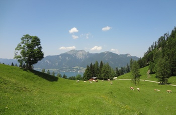 Alm, Wolfgangsee