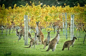 Wine and Roos