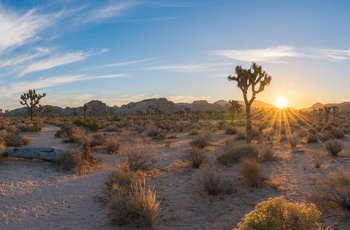 Joshua Tree National Park, Californien i USA