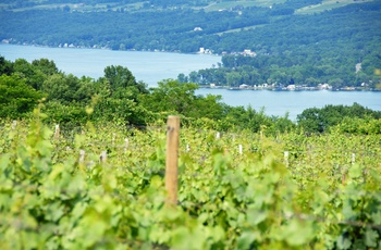 Vinmarker i Finger Lakes regionen - New York State i USA