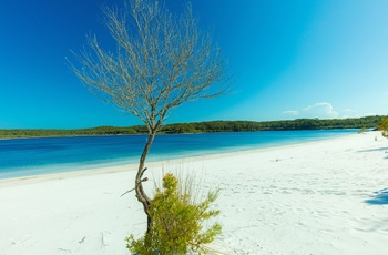 "Sandstrand ved Lake Mckenzie på Fraser Island, Queensland i Australien - ""Copyright – Tourism and Events Queensland"""