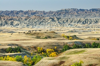 Bisoner i Badlands National Park, South Dakota