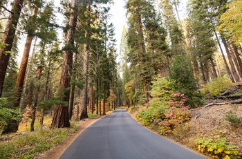 USA Californien Sequoia Nationalpark Generals Highway