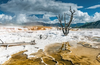 Yellowstone, Mammoth Hot Springs