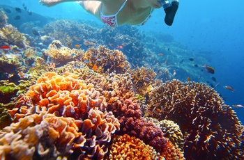 Snorkling ved Great Barrier Reef i Australien